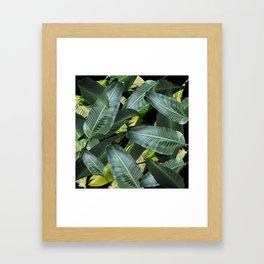 Topical palm leaf, banana leaf, black background, greens, Beach Hawaii decor Framed Art Print