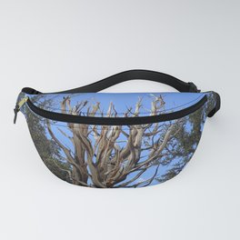 Forest trees 4,000 years old Fanny Pack