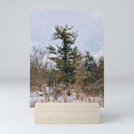 The Tallest Tree in The woods Mini Art Print