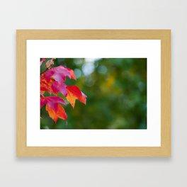 A Touch of Autumn Framed Art Print