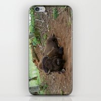 buffalo iPhone & iPod Skins featuring Buffalo by FortuneArt&Photography