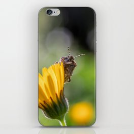 Funny insect on yellow flower iPhone Skin