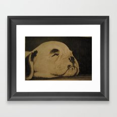 Puppy on the floor boards (Bull terrier) Framed Art Print