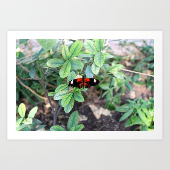 Butterfly Red Art Print