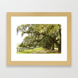 Mossy afternoon Framed Art Print