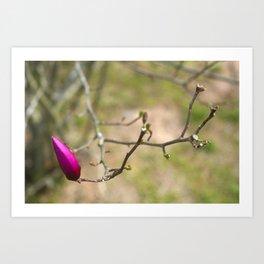 Pink Japanese magnolia bud Art Print