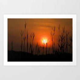 Prairie Grass Sunrise 2 Art Print