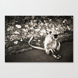 Sad Monkey Canvas Print