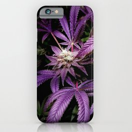 Purrple iPhone Case