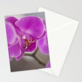 Pink Orchids Stationery Cards