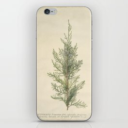 Vintage Botanical Juniper Branch iPhone Skin