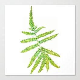 watercolor fern leaf Canvas Print