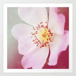 *Pinklight - Dog-rose Art Print