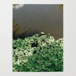 Florida Lake with Fresh Water Plants Poster