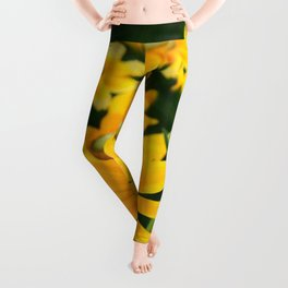 GOLDEN YELLOW  FLOWERS  GARDEN Leggings
