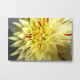 Yellow Bloom. Metal Print