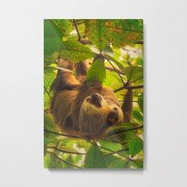 Cute sloth with baby sloth Metal Print