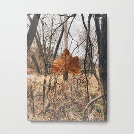 Fall Foliage #1 Metal Print