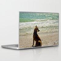 shiba Laptop & iPad Skins featuring Shiba Inu by Blue Lightning Creative