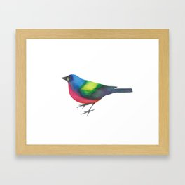 Painted Painted Bunting Framed Art Print