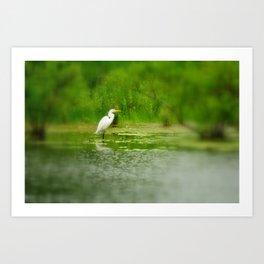 Marsh Egret Art Print
