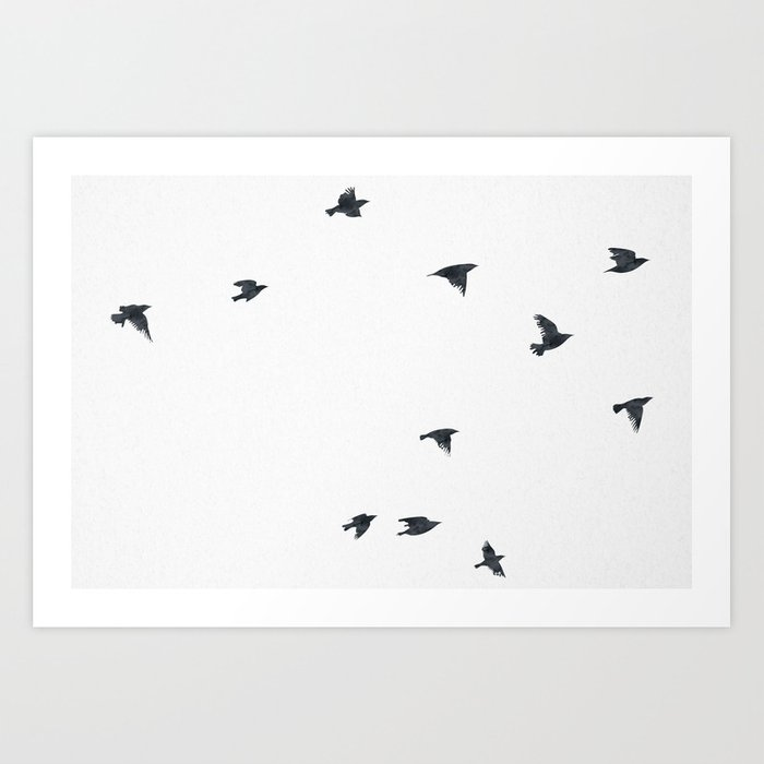 Ravens birds in black and white art print