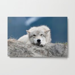 Sleepy Wolf Metal Print