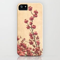 cherry blossoms iPhone (5, 5s) Slim Case