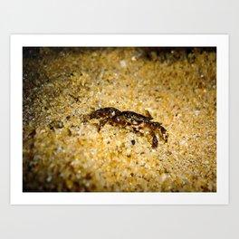 Little Crab Art Print