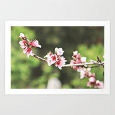 Whisp of Spring Art Print