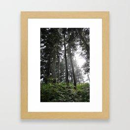 Juneau forest Framed Art Print