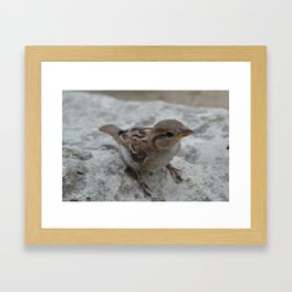 Small Bird Framed Art Print