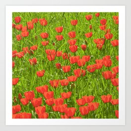 tulips field Art Print