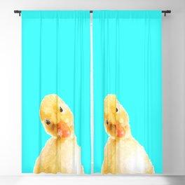 Duckling Portrait Turquoise Background Blackout Curtain