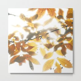 Wrapped in Light Metal Print