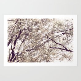 Palo Brea Blossoms on Tree in Lavender Dawn Art Print