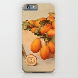 Vintage Print - Birds and Nature (1904) - Kumquats iPhone Case