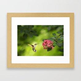 Hummer in Flight Framed Art Print