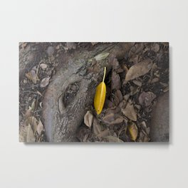 lone yellow leaf  Metal Print