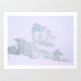 Ancient Tree in wind, snow, and fog on Windy Ridge, Colorado Art Print