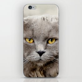 Funny Angry Cat iPhone Skin