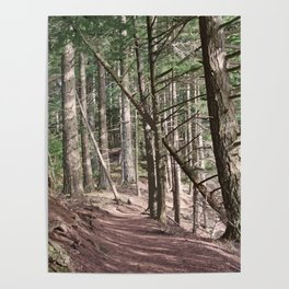 SHADOWS ON A WOODLAND PATH Poster