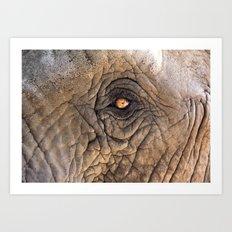 eye of elefant Art Print