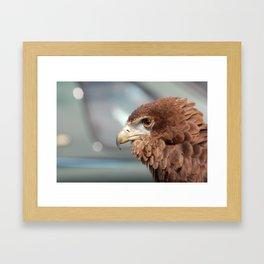 eagle brown Framed Art Print