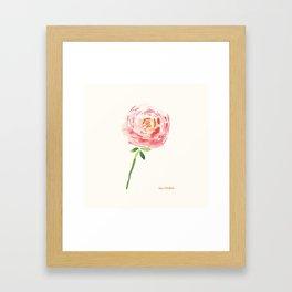 Watercolor Ranunculus Framed Art Print