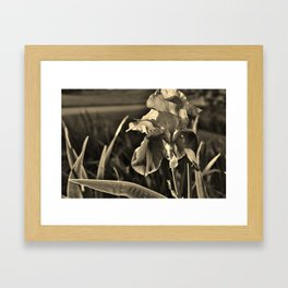 Iris Framed Art Print