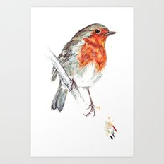 European Robin Art Print