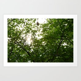 Sunlight in the Garden Art Print