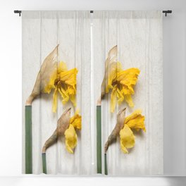 Daffodil 2 Blackout Curtain