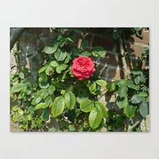 The RED One! Canvas Print